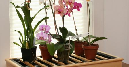 Как правильно ухаживать за домашними растениями?