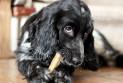 Чем кормить собаку? Опасности сухого корма
