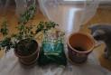 Как пересадить домашнее растение?