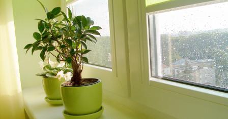 Опасные и ядовитые комнатные растения