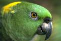 Правильно выбираем попугая