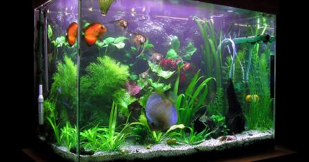Комнатные рыбки и все секреты правильного ухода за ними