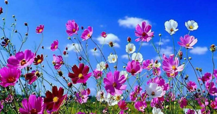 Доставка цветов на праздник
