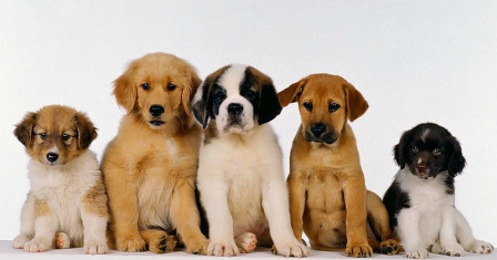 Как подготовиться к родам у собаки