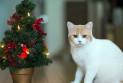 Кошка в доме: правила ухода