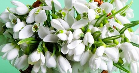Дарим радость – приобретаем цветы