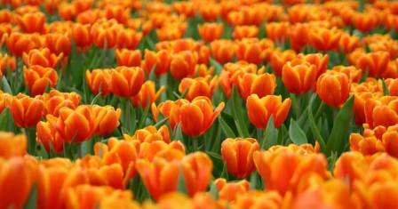 Правильный выбор отделочных материалов — оранжевые обои