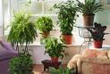 Комнатные растения – процветание и радость в вашем жилище