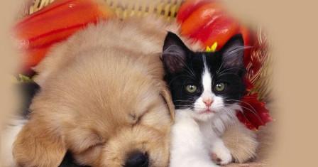 Домашнее животное – заботы и хлопоты или радость и позитив?