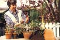 Правильный уход за комнатными растениями