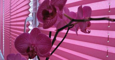 Что следует знать о шторах плиссе?