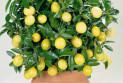 Как вырастить комнатные цветы?
