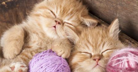 Секреты ручного вязания, которые известны опытным мастерицам