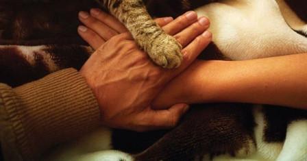 Форумы о домашних животных – польза и преимущества