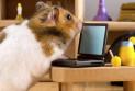 Домашние животные в офисном помещении