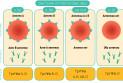 Системы групп крови человека