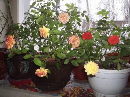 Правильный уход за растениями