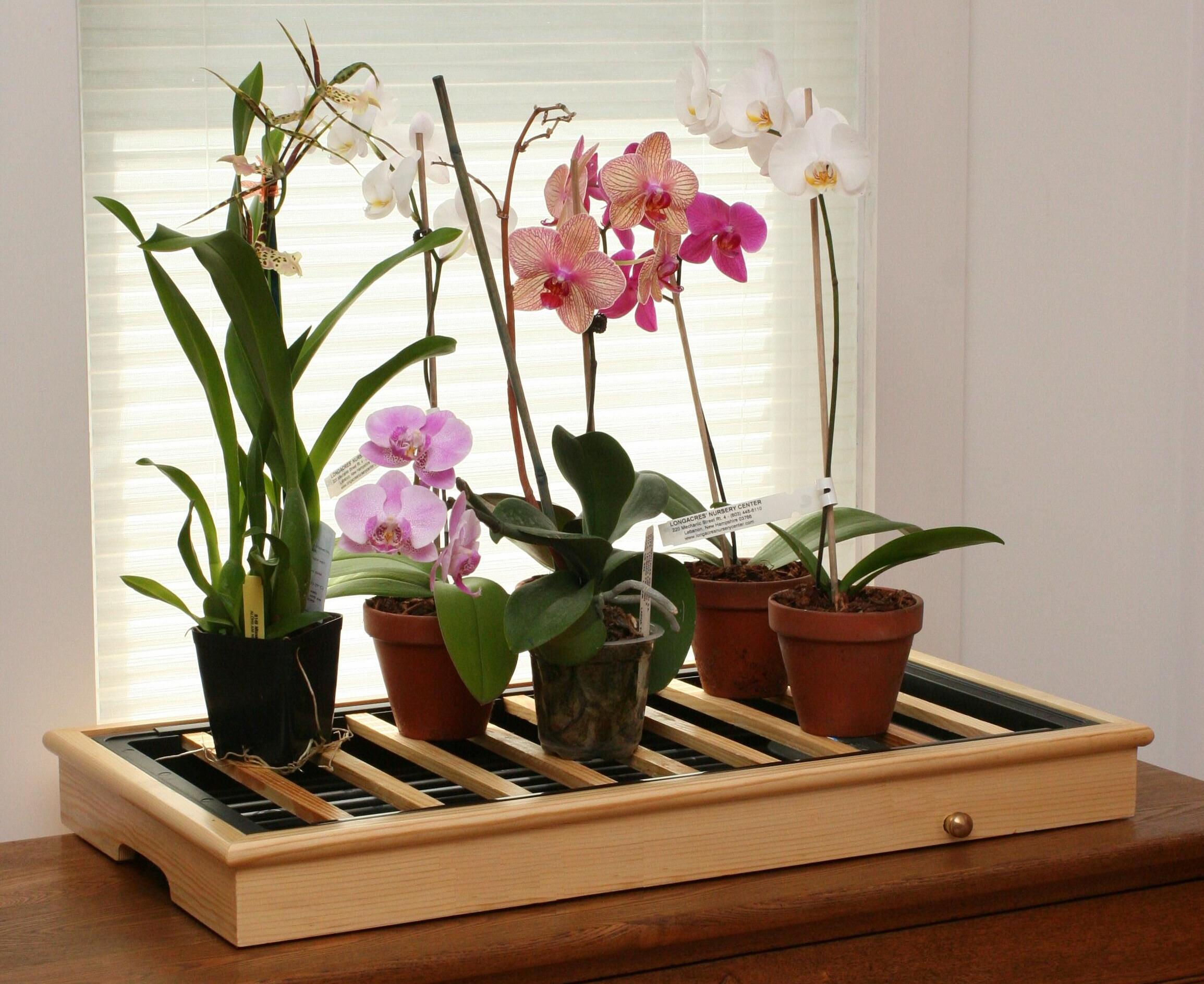 Комнатные орхидея уход в домашних условиях