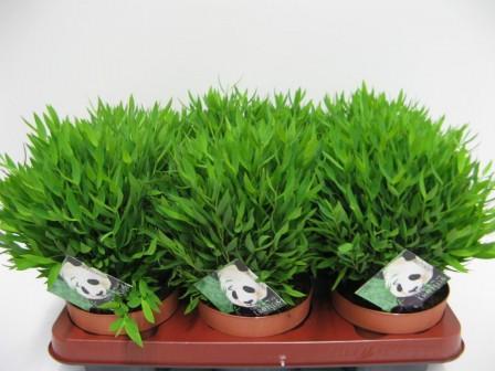 Как пересадить растение?