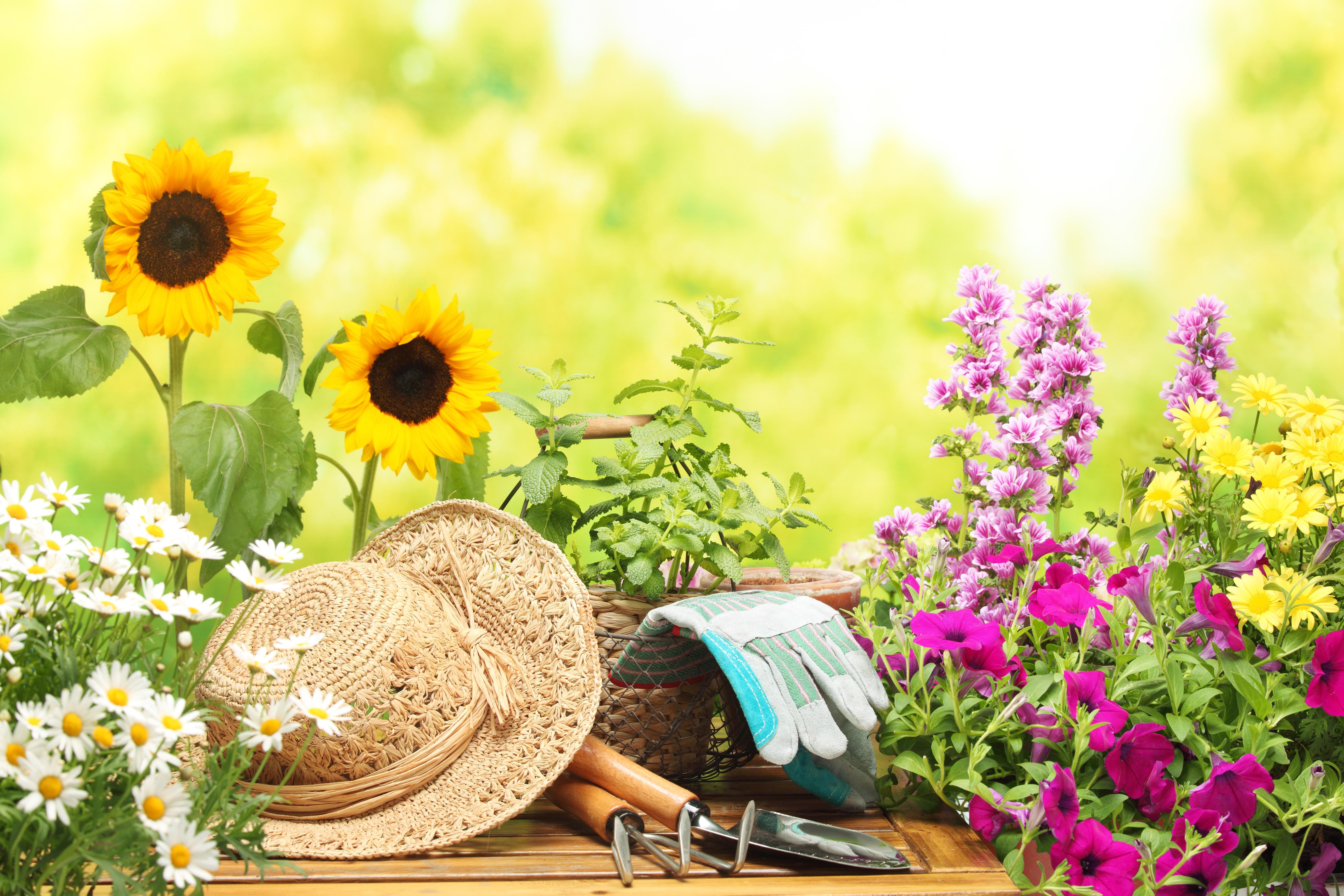 фото цветов зимой: