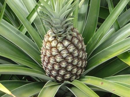 Ананас и ананасовый сок