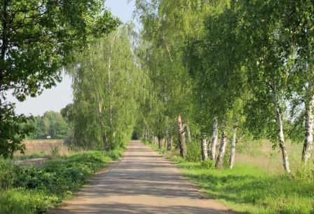 Почему выгодно приобрести земельный участок в коттеджном поселке