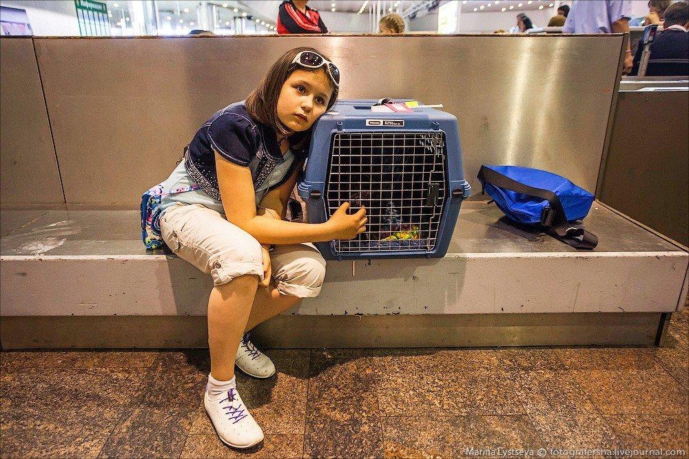 Разлука с животным на время путешествия