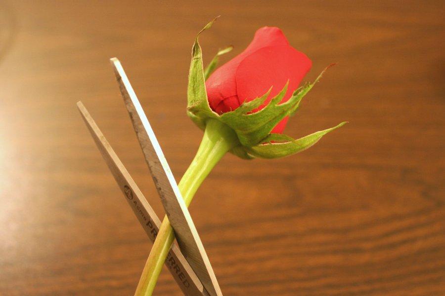 Срезаем цветы правильно