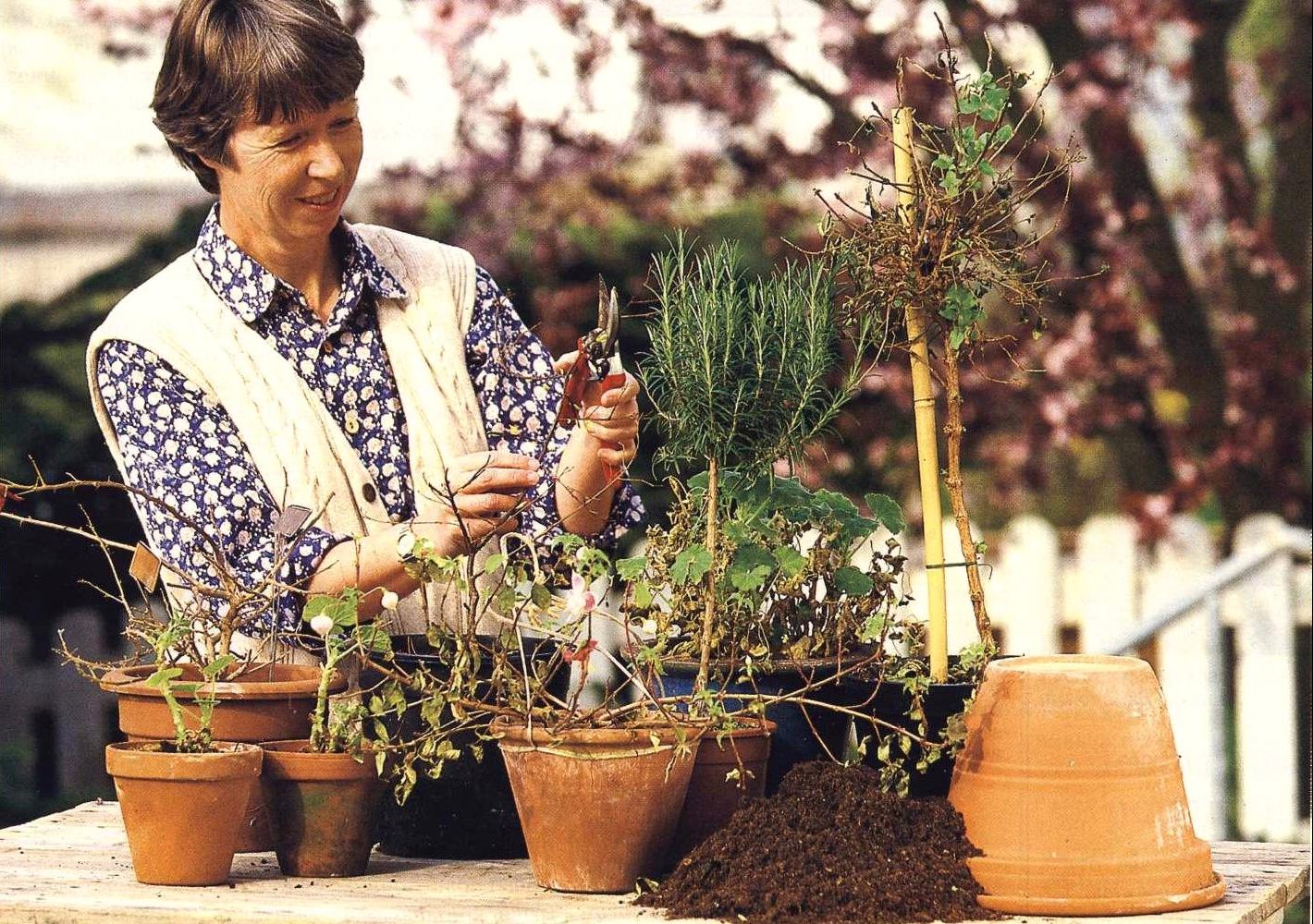 Как пересаживать цветы комнатные правильно 71