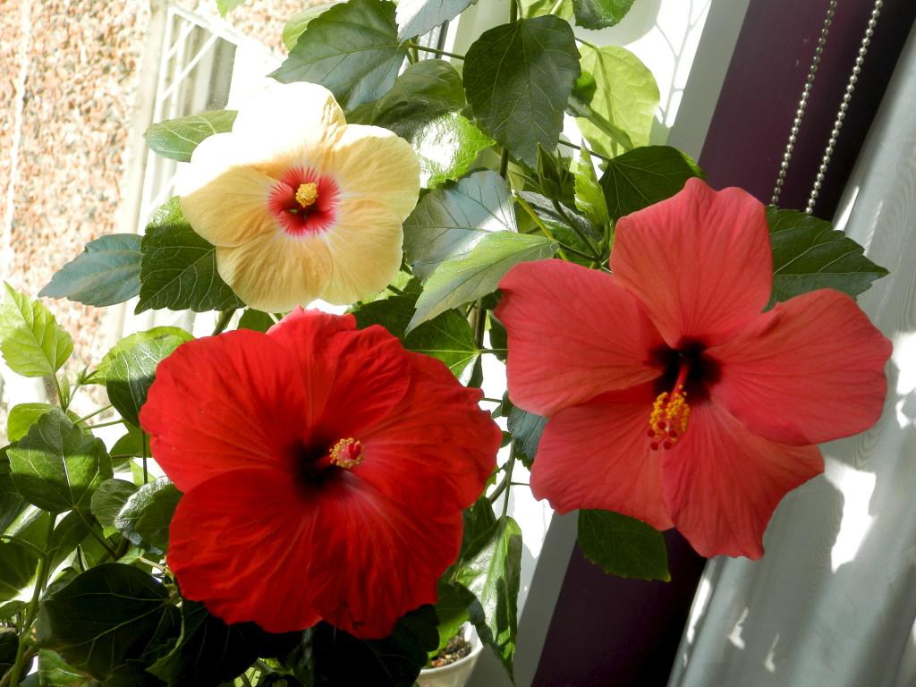 Особенности расположения растений в доме