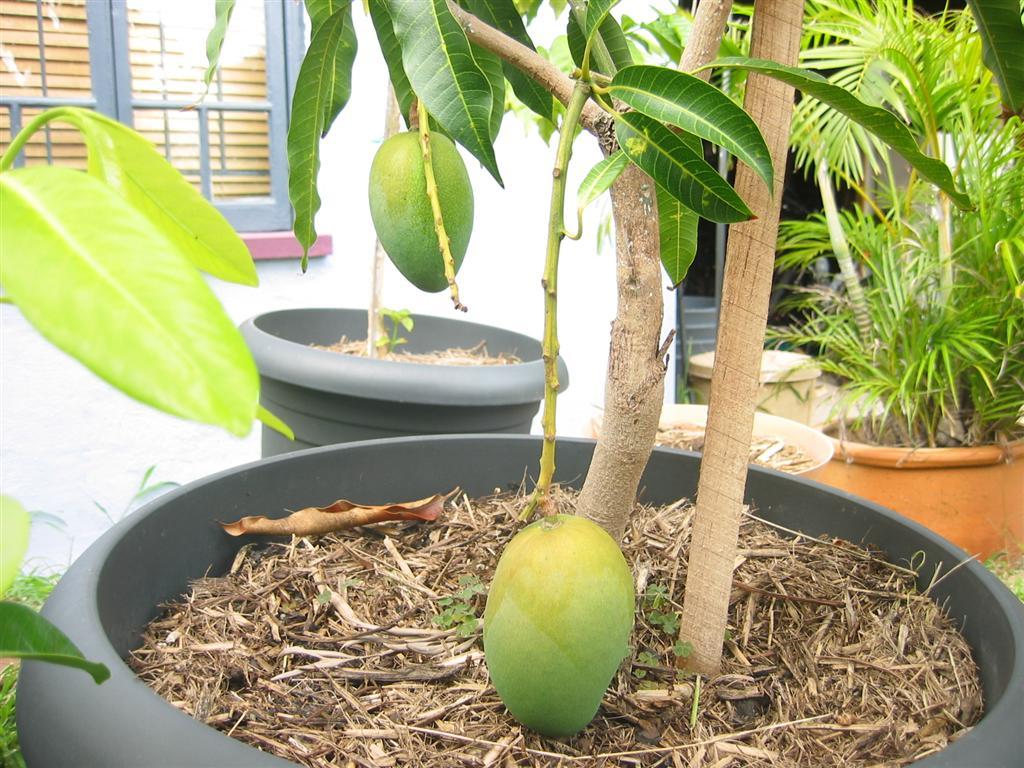 Обеспечьте комфортные условия для растений